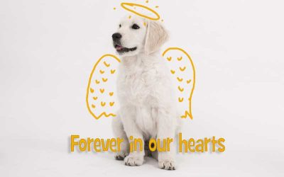 What to say when someone's dog dies